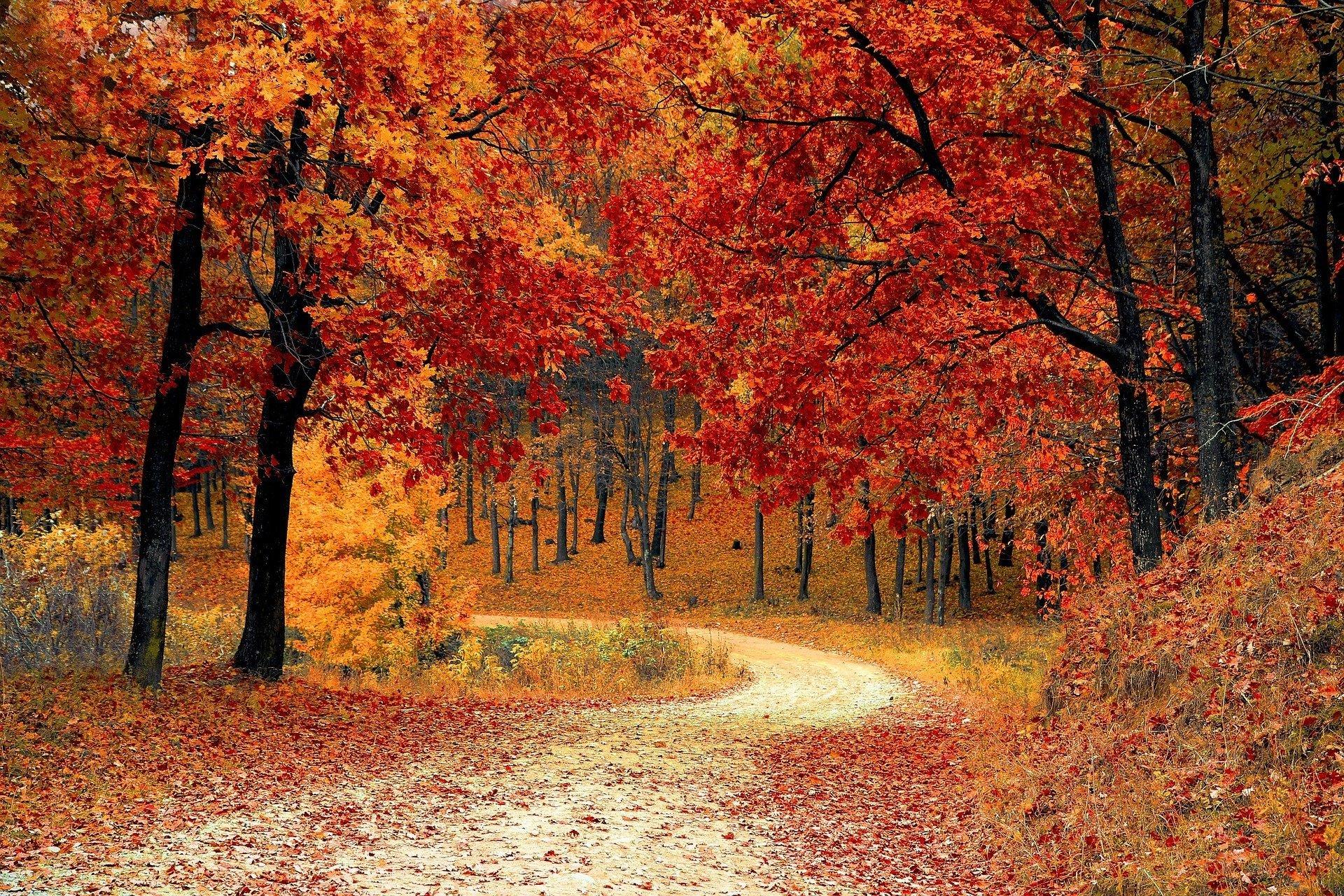 Idzie Lasem Pani Jesień Piosenka O Jesieni Tekst I Melodia