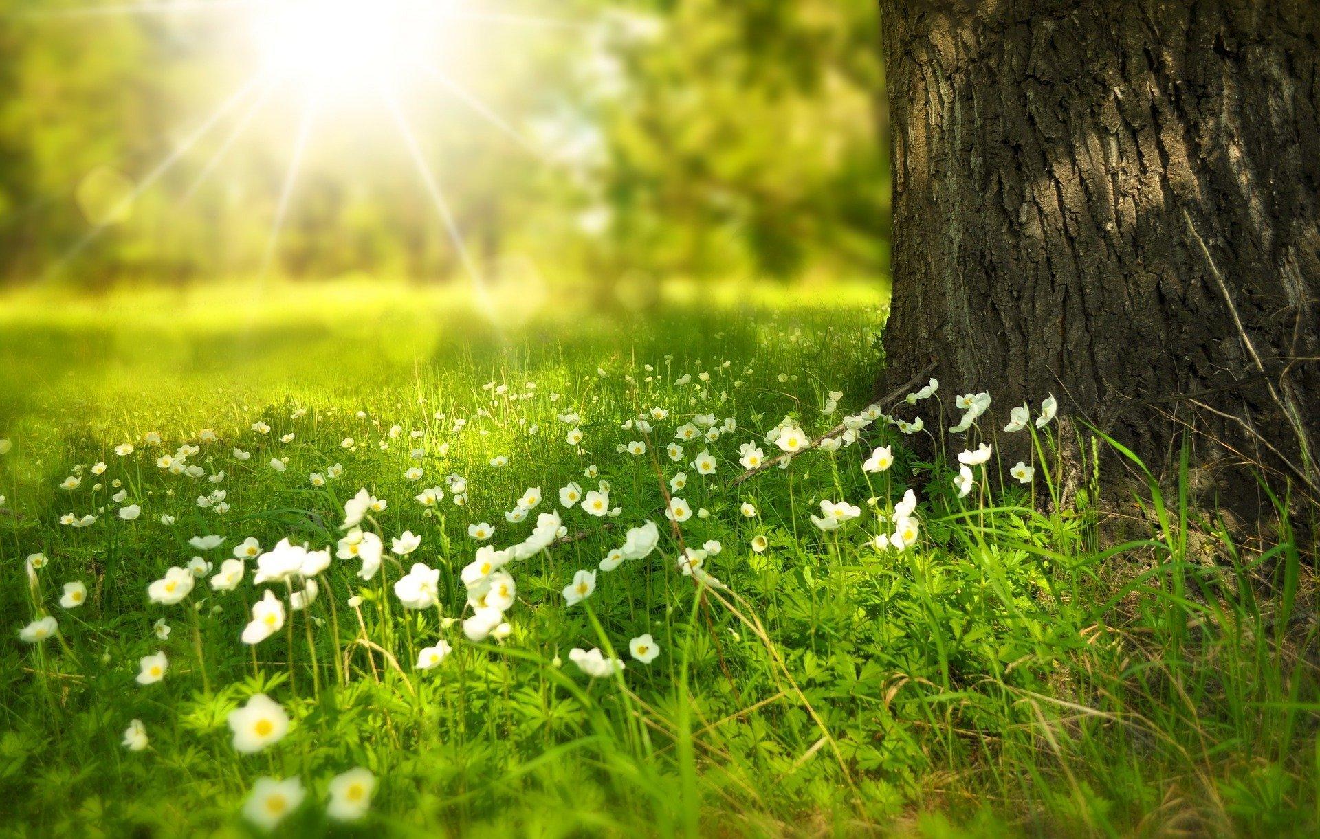 Po łące biega lato, wakacyjna piosenka dla dzieci, tekst i muzyka