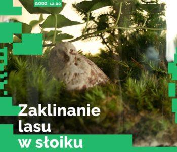 Zaklinanie lasu w słoiku – warsztaty w DK Kadr