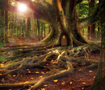 Uratuj las z leśnikiem – bezpłatny spektakl dla dzieci. Częstochowa
