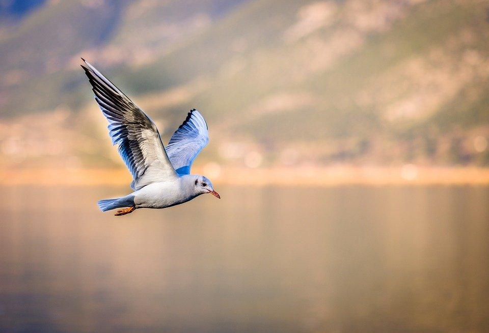 Dzień z życia ornitologa – tajniki życia ptaków z wysp wiślanych