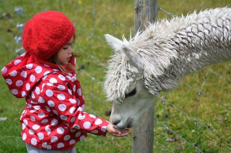 Mini zoo Wrocław i okolice, atrakcje dla dzieci