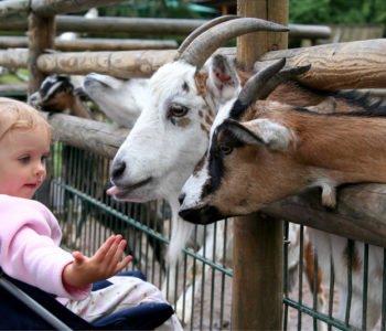 Miejsca ze zwierzętami we Wrocławiu atrakcje dla dzieci