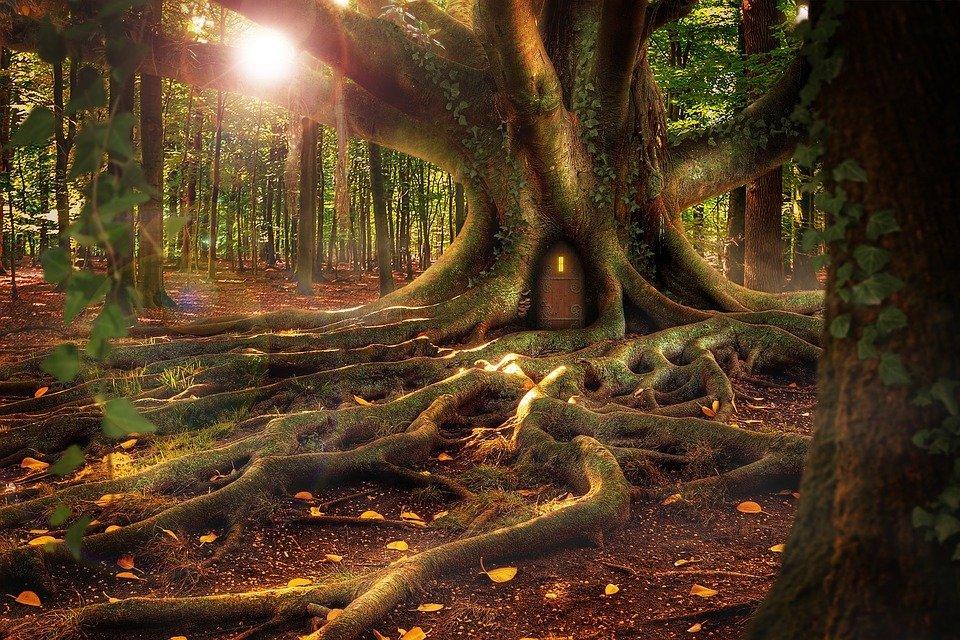 Uratuj las z leśnikiem