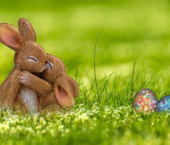 Wielkanocny zając dla juniorów i seniorów