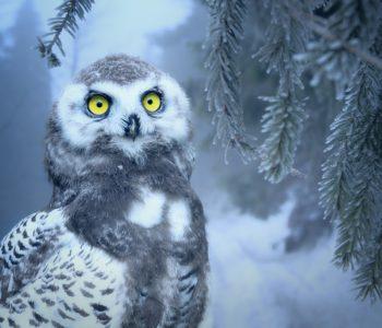 Teatr Ptasie Melodie: Leśna przygoda, czyli na ratunek planecie