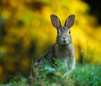 Wielkanoc w Wierchomli. Tam cenią tradycję. Atrakcyjna oferta na Wielkanoc