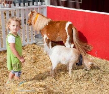 Miejsca ze zwierzętami w Łodzi, atrakcje dla dzieci