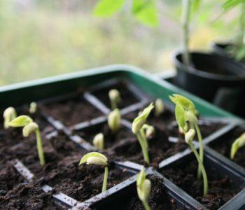 Miejskie ogrodnictwo – ogródki parapetowe
