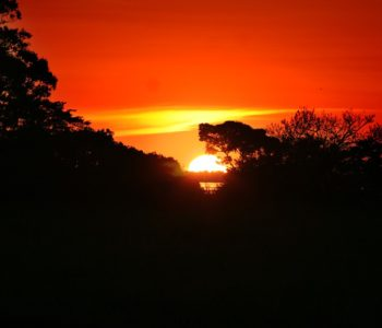 Leniwa niedziela z… Amazonią