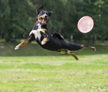 Zawody psiej akrobacji Latające Psy