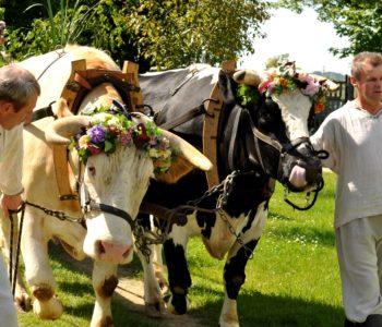 Festyn Zielonoświątkowy w Szreniawie