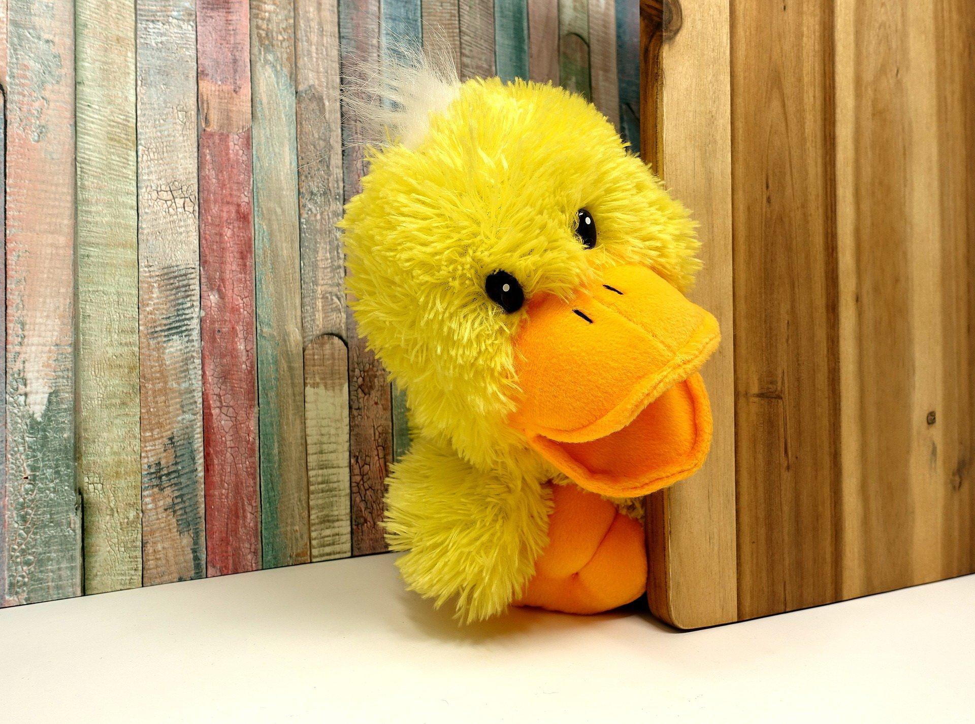 Idzie kaczka śmieszny wierszyk na walentynki dla dzieci