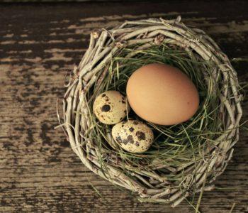 jajko mądrzejsze od kury wierszyk dla dzieci