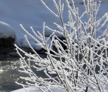 Lecą z nieba płatki śniegu