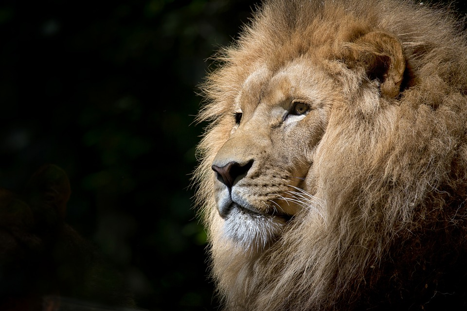 Maski afrykańskich zwierząt - warsztaty