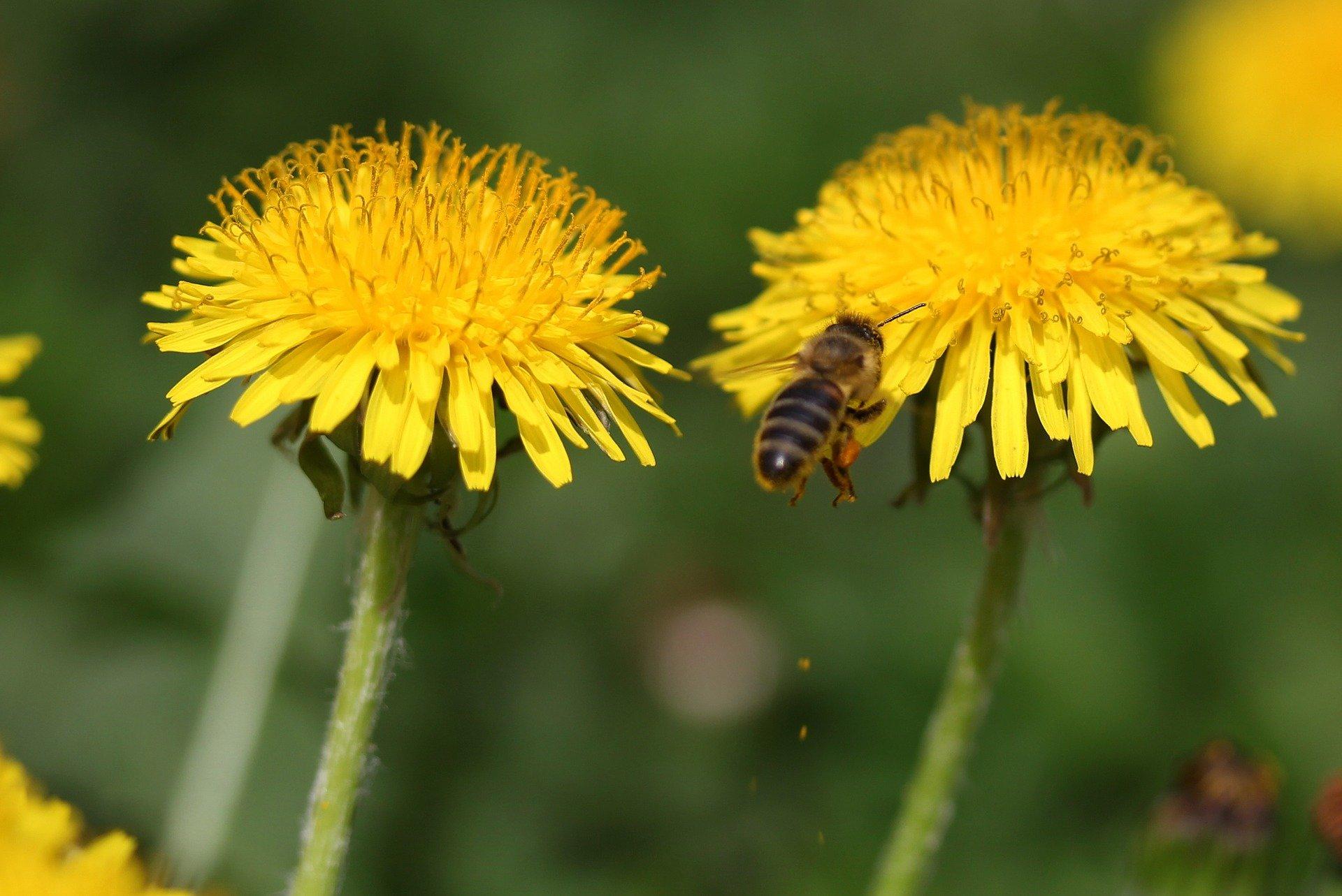 Każdy z nas może pomóc bzykającym przyjaciołom, czyli jak stworzyć przestrzeń przyjazną pszczołom