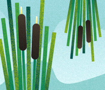 Popołudnie w Muzeum: Zielone Świątki – tatarak w kątki