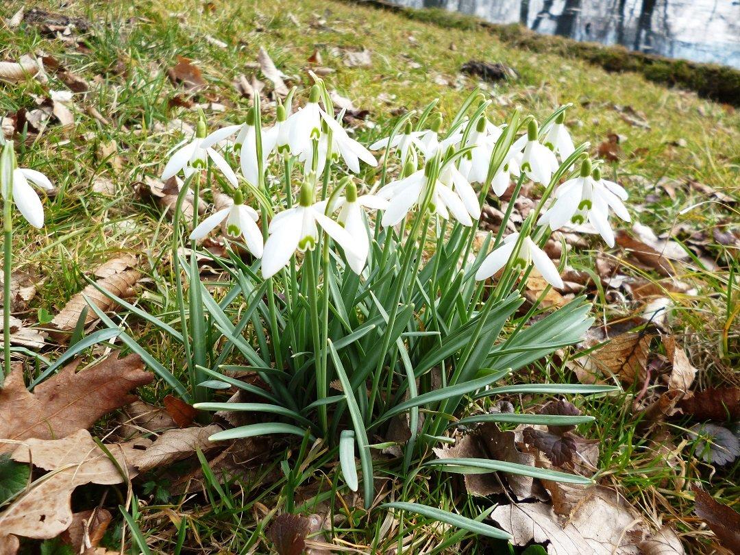 Wilanowski Klub Przyrodniczy: W świecie kwiatów