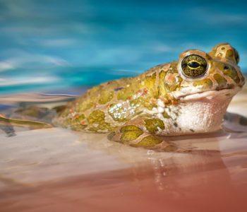 Miejscy Przyrodnicy. Zwierzęta wodne – warsztat w terenie