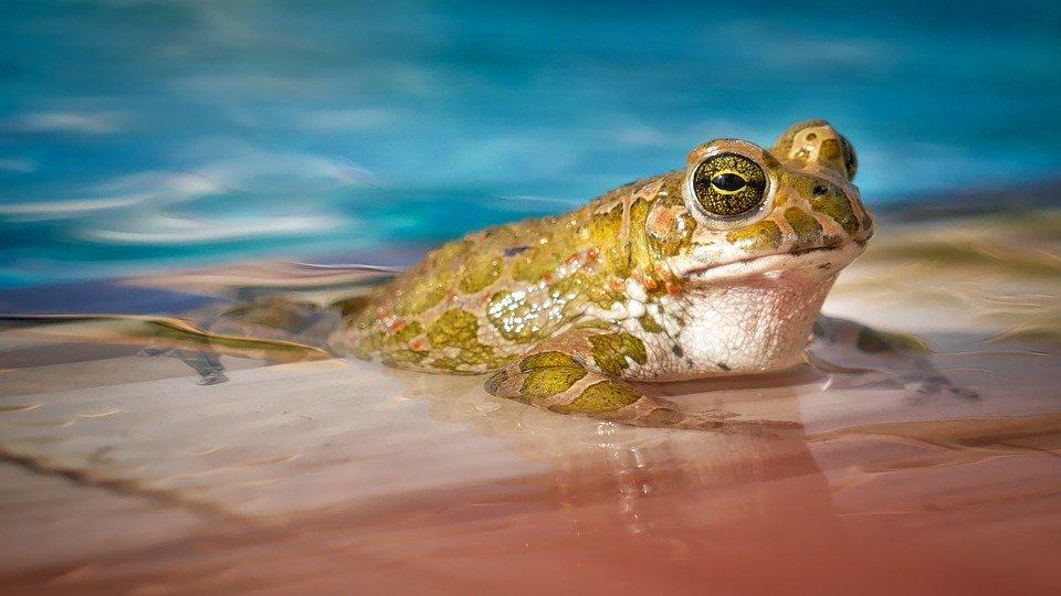 Miejscy Przyrodnicy. Zwierzęta wodne - warsztat w terenie