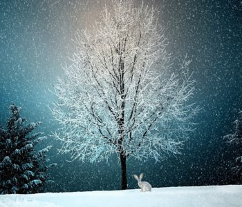 Zima zima zima pada pada śnieg