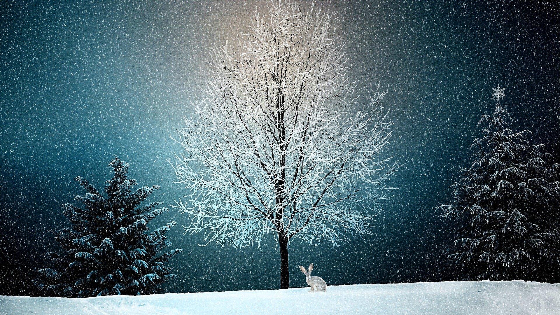 piosenka Zima zima zima pada pada śnieg, tekst i melodia