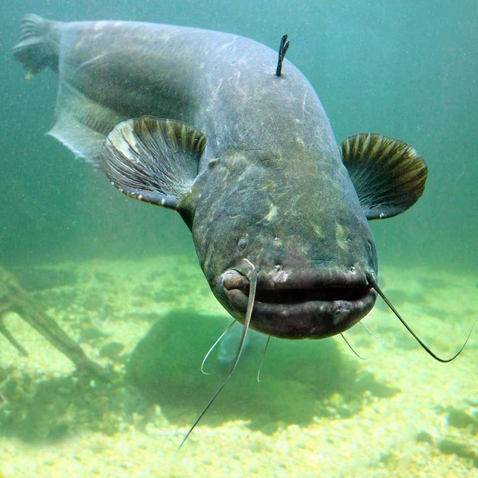 Sum suma sumarum – jakie ryby żyją w Wiśle - warsztaty