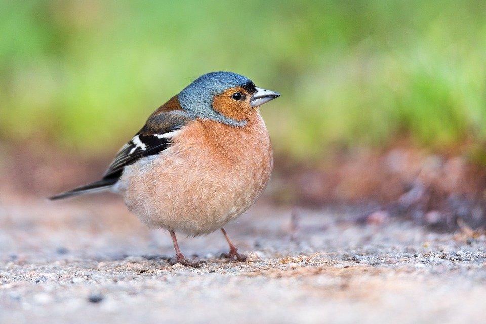 Miejscy Przyrodnicy: Ptaki w mieście