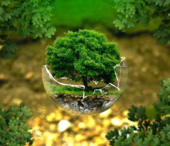 Razem chronimy przyrodę – warsztaty ekologiczne