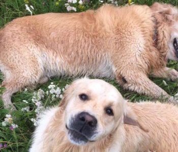 Festyn z okazji Dnia Psa – Roni i Przyjaciele