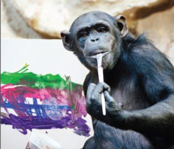 Szympansica Lucy - wystawa dzieł artystki w Muzeum Warszawskiej Pragi