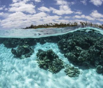 Aby oceany pozostały dzikie i pełne ryb! Światowy Dzień Oceanów