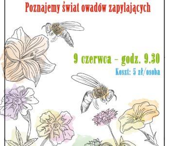 Świat owadów zapylających