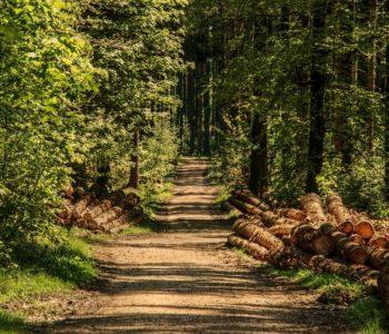 Morysin – spacery przyrodnicze