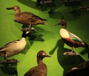 Ptaki fruwają? – Wakacyjne Spotkania Rodzinne
