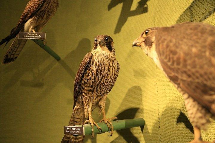Ptasi drapieżnicy - Wakacyjne Spotkania Rodzinne