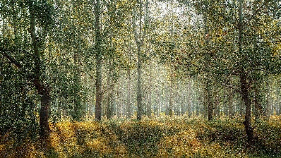 Kto w lesie mieszka? - warsztat