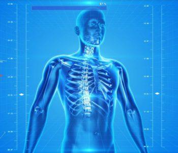 Ciało w ruch – ile kości ma człowiek? – warsztaty