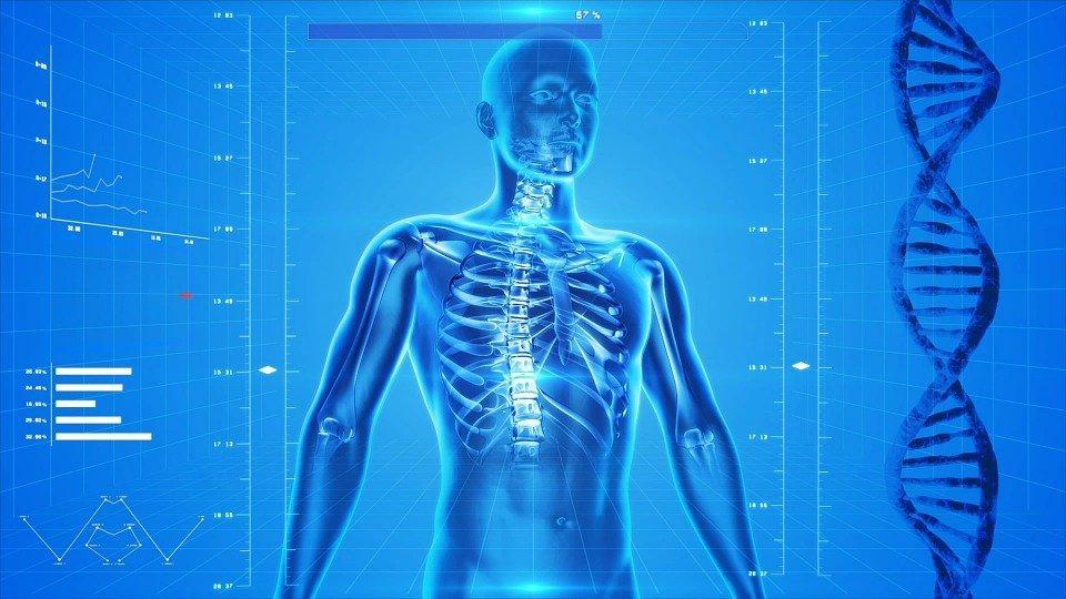 Ciało w ruch – ile kości ma człowiek? - warsztaty
