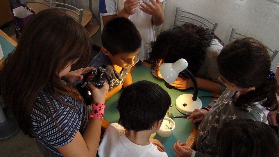 Sztuka mikroskopowania - warsztaty dla dzieci i dorosłych