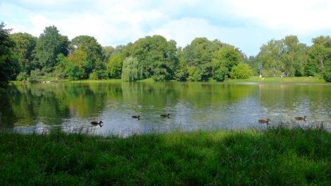 jezioro park skaryszewski