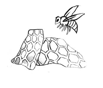 miód, pszczoła, plaster miodu - kolorowanka