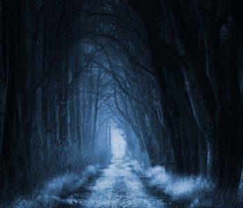 Leśna Przygoda dla dzieci: Zakazany Las