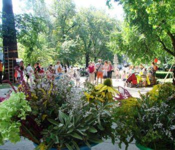 Święto Ziół w Muzeum Etnograficznym
