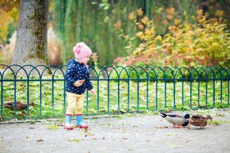 dziecko karmi kaczki w parku