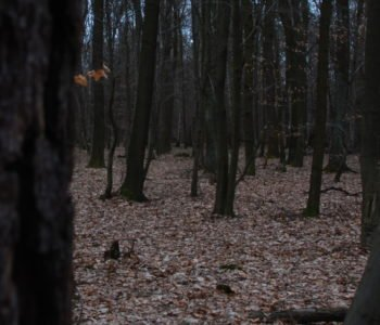 2030: Świat bez Prądu - Leśna Przygoda