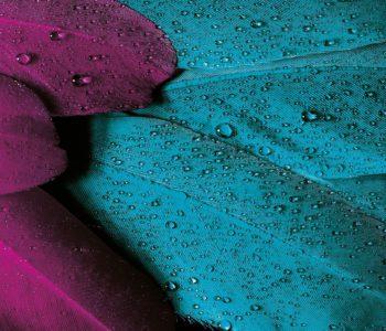 Warsztaty artystyczne – kolorowe ptaki