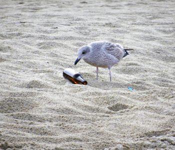 Sprzatanie świata - Gdańsk plaże atrakcje dla dzieci 2018 Trójmiasto