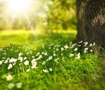 Pożegnanie lata – piknik rodzinny